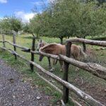 cavalli rifugio